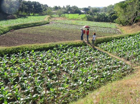 Tobacco Terraces, Cabugao, Ilocos Sur, 2009