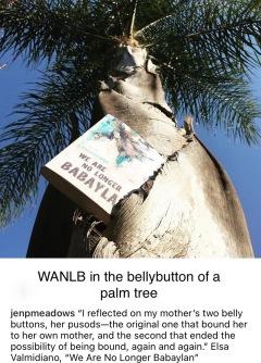 Jen's Palm Tree